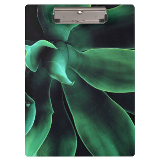 Green Agave Attenuata Clipboard