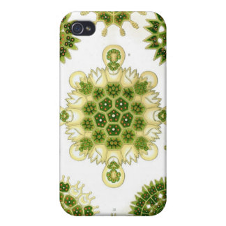 green algae, i-phone 4 case cover for iPhone 4