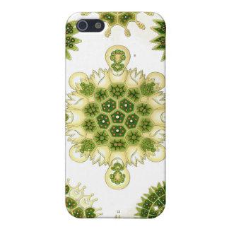 green algae, i-phone 4 case iPhone 5/5S covers