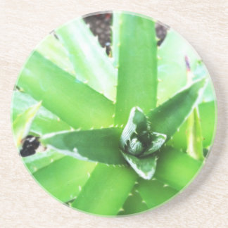 Green Aloe Coaster
