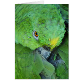 Green Amazon Parrot Card