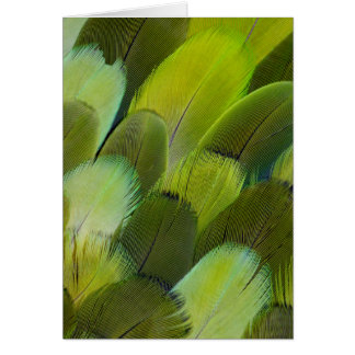 Green Amazon Parrot Feathers Card