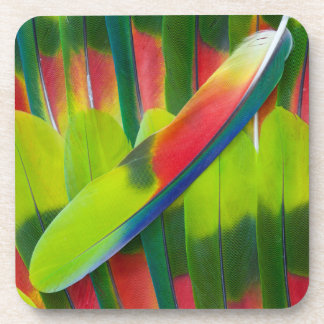 Green amazon parrot feathers coaster