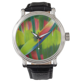 Green amazon parrot feathers watch