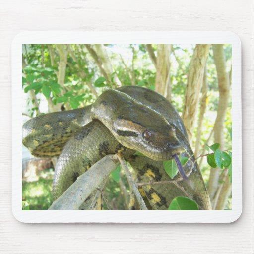 Green Anaconda Mousepads