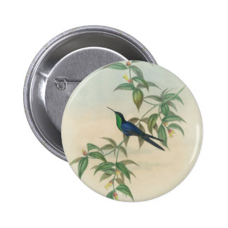 Green and Blue Gould Hummingbird 6 Cm Round Badge