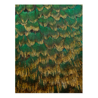 Green And Gold Pheasant Feathers Postcard