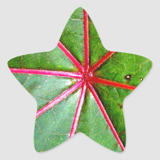 Green and Red Castor Leaf Star Stickers