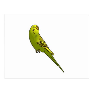 Green and yellow budgie post cards