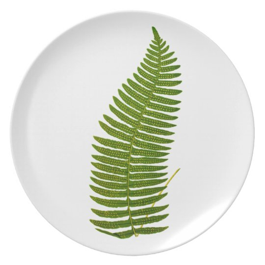 Green and Yellow Fern Leaf Botanical Illustration Plate