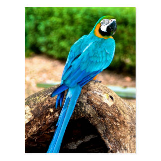 Green and Yellow Macaw, Trinidad Postcard