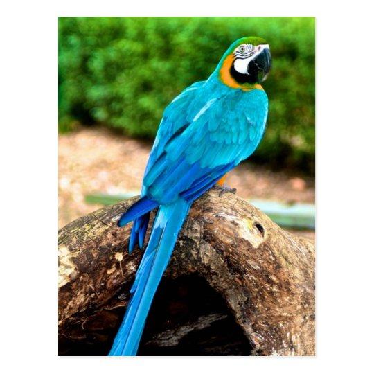 Green and Yellow Macaw, Trinidad Postcard