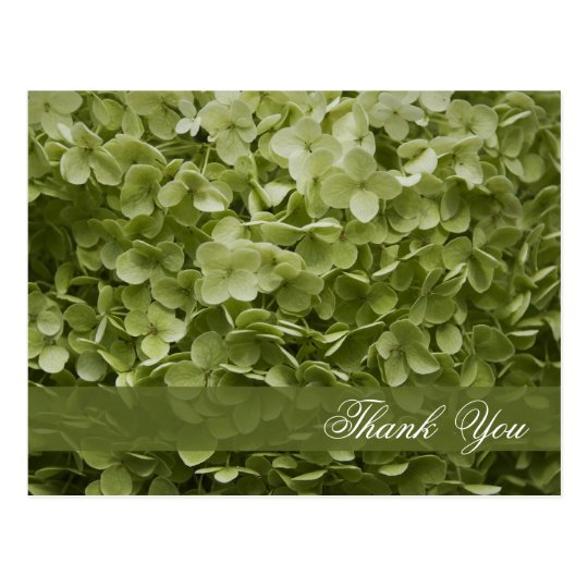 Green Annabelle Hydrangea Floral Thank You Postcard