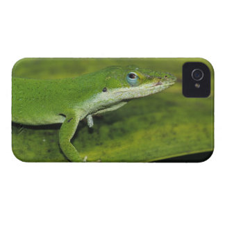 Green Anole, Anolis carolinensis, adult on palm iPhone 4 Case