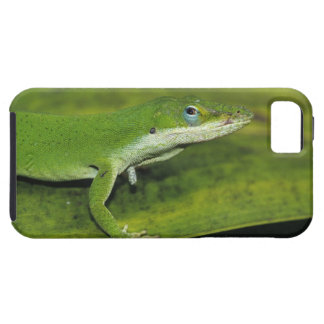 Green Anole, Anolis carolinensis, adult on palm iPhone 5 Cover