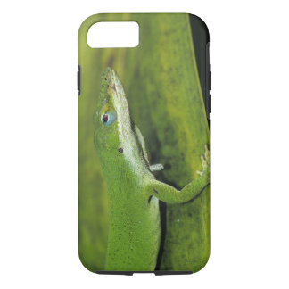 Green Anole, Anolis carolinensis, adult on palm iPhone 8/7 Case