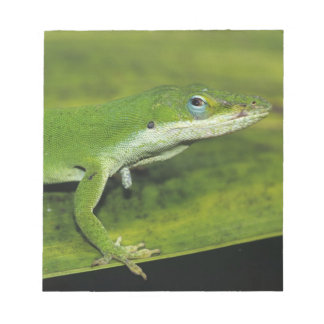 Green Anole, Anolis carolinensis, adult on palm Notepad
