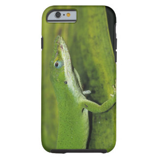 Green Anole, Anolis carolinensis, adult on palm Tough iPhone 6 Case