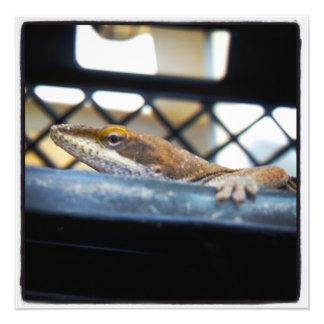 Green Anole Lizard Color Prints Art Photo