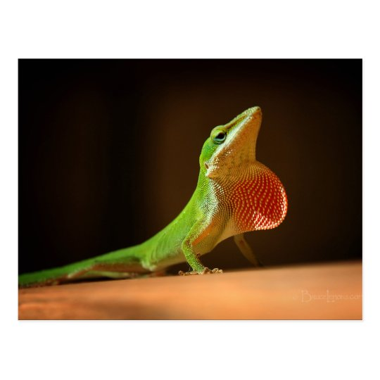 Green Anole Lizard with Red Thraot Postcard