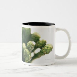 Green Asparagus Two-Tone Coffee Mug