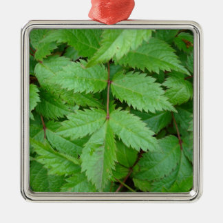 green Astilbe leaves Silver-Colored Square Decoration