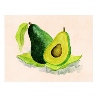 Green Avocado Still Life Fruit in Watercolors Postcard