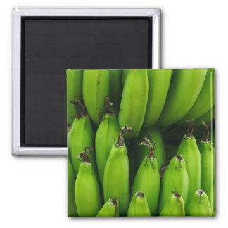 Green banana fruit pattern magnet