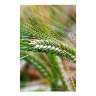 Green Barley Stationery Paper