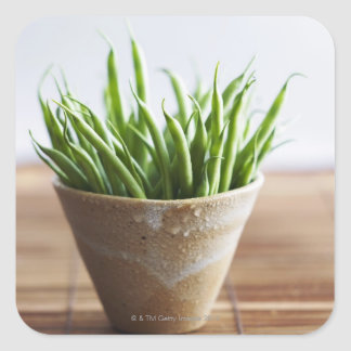 Green beans in pot on bamboo surface square sticker