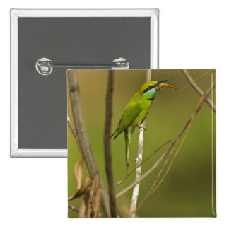 Green Bee-eater eating insect 15 Cm Square Badge