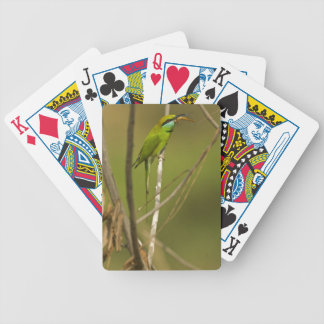 Green Bee-eater eating insect Bicycle Playing Cards