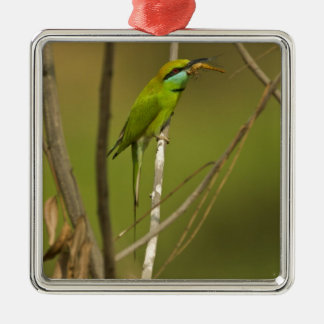 Green Bee-eater eating insect Christmas Ornament