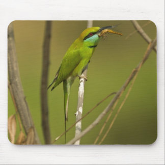 Green Bee-eater eating insect Mouse Mat