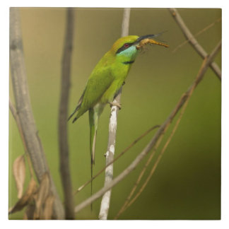 Green Bee-eater eating insect Tile