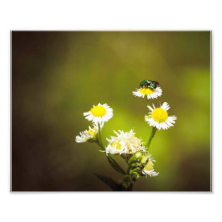 Green Bee on White Flowers Photo Print