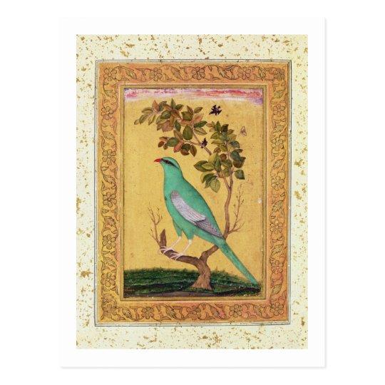 Green Bird, Mughal (gouache on paper) Postcard
