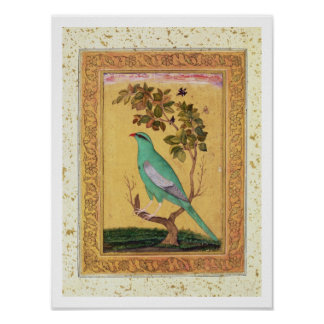 Green Bird, Mughal (gouache on paper) Poster