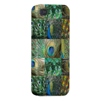 Green Blue Peacock photo collage iPhone 4 Cover