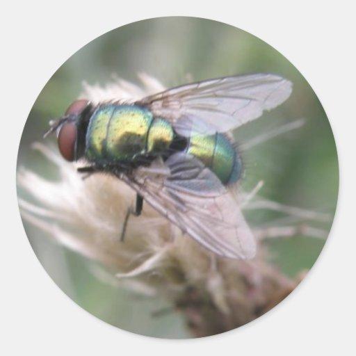 Green Bottle Fly Macro Sticker