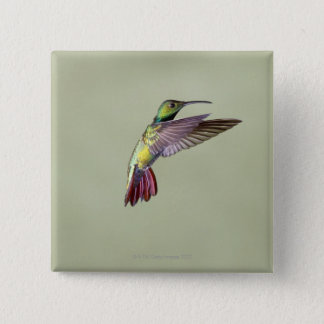 Green-breasted Mango Hummingbird Anthracocorax 2 15 Cm Square Badge