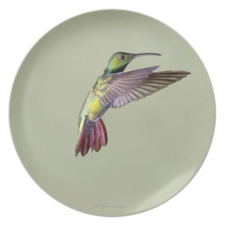 Green-breasted Mango Hummingbird Anthracocorax 2 Dinner Plate