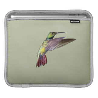 Green-breasted Mango Hummingbird Anthracocorax 2 iPad Sleeve