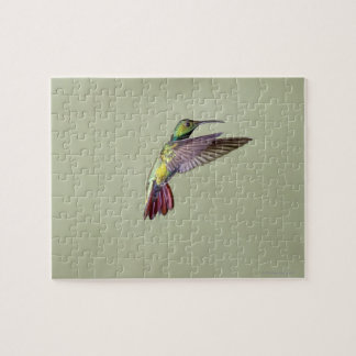 Green-breasted Mango Hummingbird Anthracocorax 2 Jigsaw Puzzle