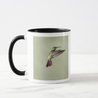 Green-breasted Mango Hummingbird Anthracocorax 2 Mug