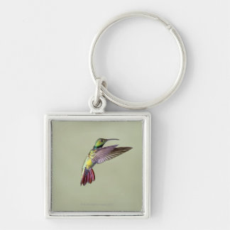Green-breasted Mango Hummingbird Anthracocorax 2 Silver-Colored Square Key Ring