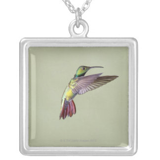 Green-breasted Mango Hummingbird Anthracocorax 2 Silver Plated Necklace