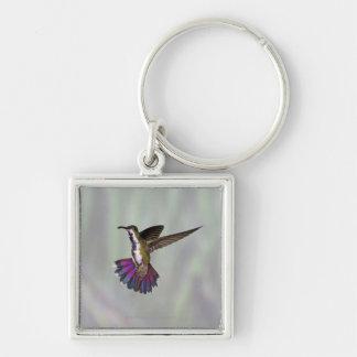 Green-breasted Mango Hummingbird Anthracocorax 3 Key Ring