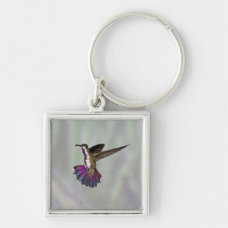 Green-breasted Mango Hummingbird Anthracocorax 3 Silver-Colored Square Key Ring