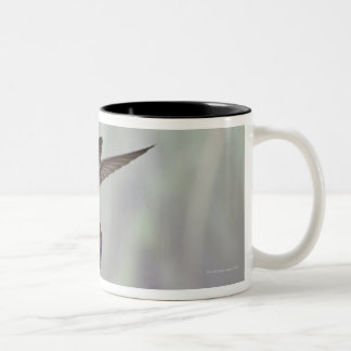 Green-breasted Mango Hummingbird Anthracocorax 3 Two-Tone Coffee Mug